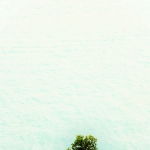 Port Darwin Tree